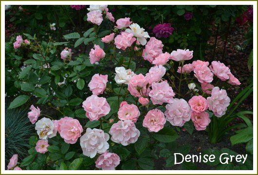 Album - Fleur-2