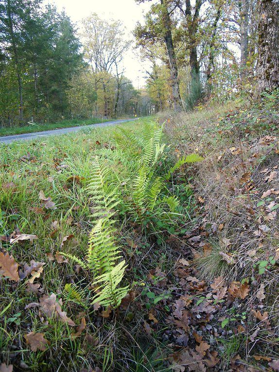 Venez goûter aux charmes d'une nature préservée, admirer les couleurs de l'automne, profiter d'une arrière- saison douce et ensoleillée, aller à la cueillette des champignons...