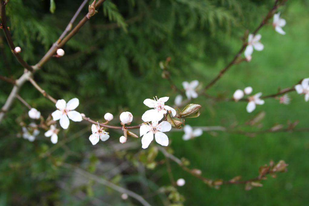 Les fleurs de Celle