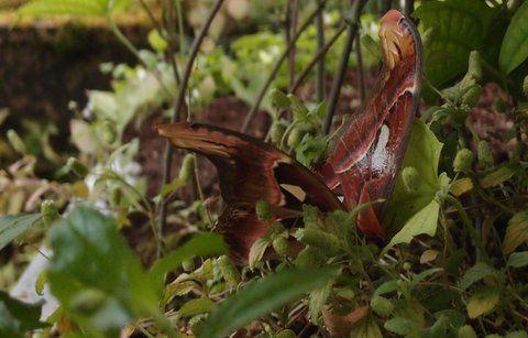 Papillon,s et libellules