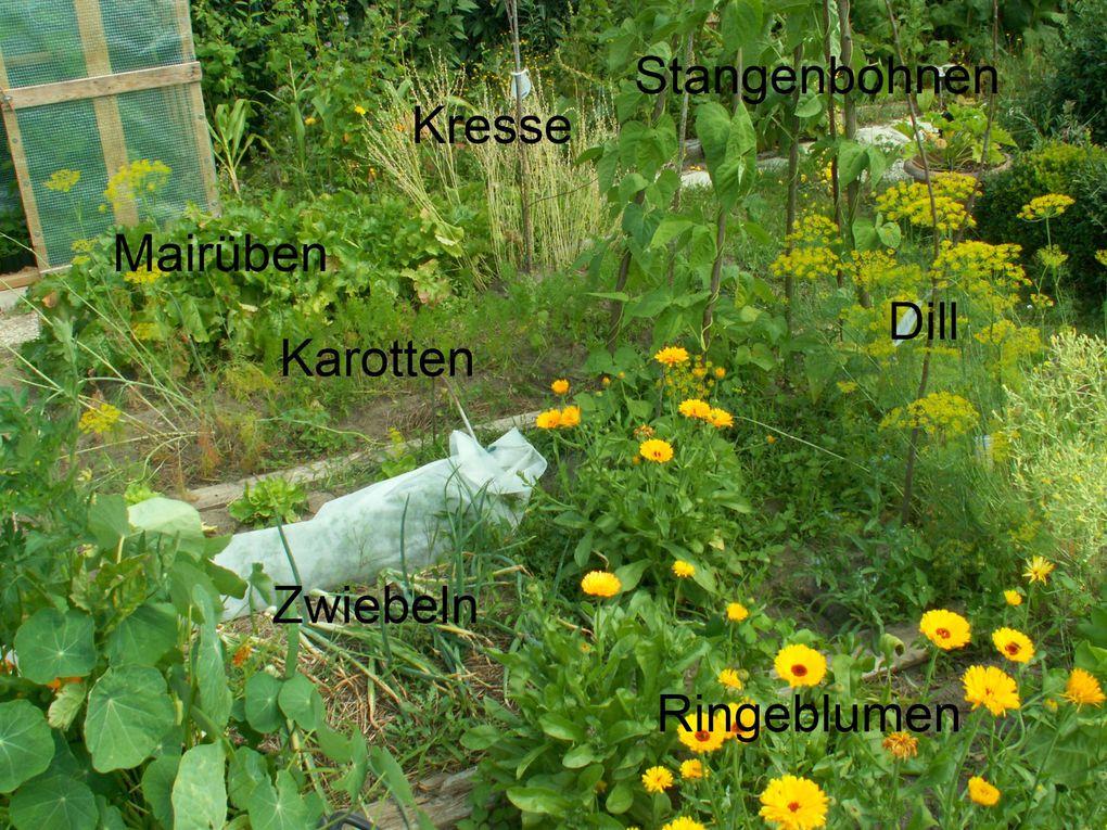 Album - Garten