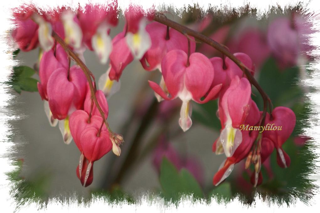 Fleurs diverses , témoignage des saisons qui passent .Pour certaines sans nom.