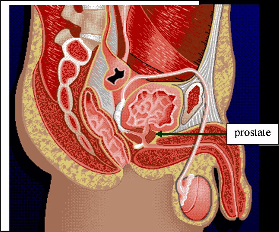 Retrouvez toute l'anatomie humaine traitable à distance par la réflexologie plantaire.