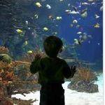 E-enfance, l'association qui protège nos enfants