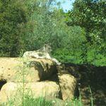 Parco Natura Viva a Bussolengo (Vr)