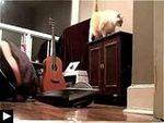 3 Videos: Le chat et l'ecran plat + 2 chats ouvrent une porte + Le chat et le renard