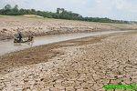 BRAZIL: Rainforest razed so cattle can graze