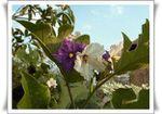 L'étymologie nous raconte l'histoire de l'aubergine
