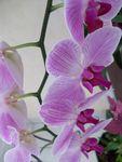 mes orchidées .....une histoire d'amour... 2