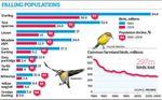 96 - Les ornithologues anglais lancent un cri d'alarme : les oiseaux meurent à un rythme effréné.