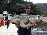 FTF hot news : 20 Lbs GIANT BASS in Japan !!!