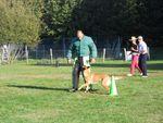 Un concours régional canin de Ring satisfaisant.