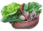 Sans pesticide, l'AMAP assure un développement durable