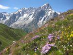 Fin juin 2011 : Bal floral et ambiance …… autour du Mont Blanc