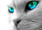 Vos chats aux aguets...