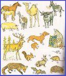 LECCION N° 17 - Algunos animales