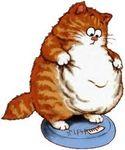 L'obésité touche désormais les chats et les chiens