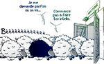 Expérience de Asch : Le conformisme (rediff)