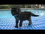 Vidéo : chaton qui va partout...