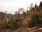 Dix ans après, les séquelles de la tempête du siècle