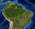 Derechos indígenas amazónicos: clave para salvar los bosques
