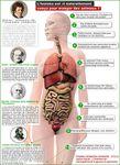 La toxicité des produits animaux