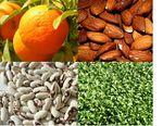 Les sources de calcium végétal