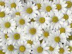 Des plantes qui purifient l'air