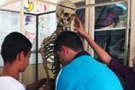 Le squelette d'un professeur exposé en classe de biologie