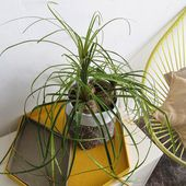 Ohoh Blog - diy and crafts: Make a planter with a plastic bottle