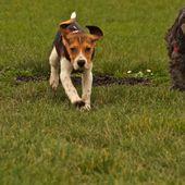 Bien vivre avec son chien: Ne pas se leurrer sur le leurre