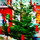#Christmas #Colors . #Green &amp&#x3B; #red &...