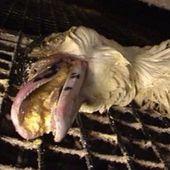 Amazon UK : le foie gras retiré suite à des vidéos de L214. ( l214.com)