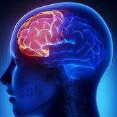 4 exercices pour ne pas perdre en clarté mentale et exercer votre cerveau pendant la vieillesse - Améliore ta Santé