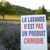 Sauvons la lavande et les plantes à parfum aromatiques et médicinales