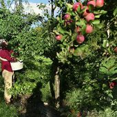 Miracle Farms, a 5-acre commercial permaculture orchard in Southern Quebec