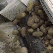 Les 14 ingrédients d'une frite Macdo : scandale sanitaire en vue chez Mac Donald's - Notre Terre
