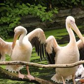 Content from Ausflug Zoo Rostock 09.07.2016