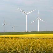 Ontario wind auction pushes down prices