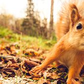 Mapping Hundreds of Power Disruptions and Cyberattacks Caused by... Squirrels