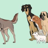 A New Origin Story for Dogs