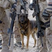 Afghanistan: Dogs of War