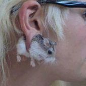 People for the Ethical Treatment of Animals (PETA): Stop this cruel fashion of wearing small pets.