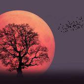 Revivez la super Lune grâce à ces somptueuses photographies prises dans le monde entier
