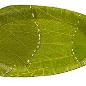 Cette entreprise a créé des assiettes en feuilles d'arbre pour lutter contre la pollution plastique
