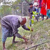 Depuis 48 ans, cet homme modeste dédie sa vie à la nature en plantant un arbre chaque jour
