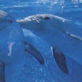 delphinpaar