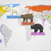 Des ours et des hommes
