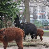 Content from Windiger Besuch im Zoo Berlin 11.01.2014