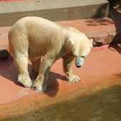 Content from Besuch Zoo Rostock 02.05.2015 Teil 1.